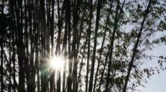 Time lapse of serene morning sun burst in between bamboo zen garden. Stock Footage