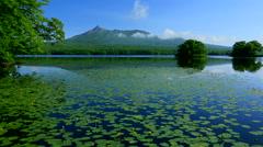 Onuma Park, Hokkaido, Japan Stock Footage
