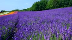 Flower field, Hokkaido, Japan Stock Footage
