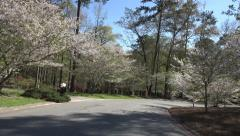 Driving Down Street Of Macon Georgia With Canopy Of Cherry Blossom Trees 03 Stock Footage