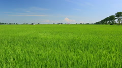 Rice field in Akita Prefecture, Japan Stock Footage