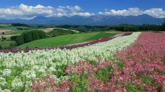 Hokkaido countryside, Japan Stock Footage