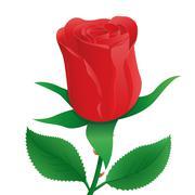 Rose Illustration Piirros