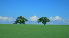 Trees on grassland, Hokkaido, Japan Stock Footage
