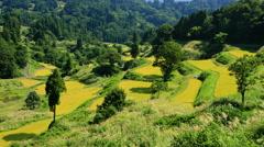 Hoshitoge Rice Fields, Niigata Prefecture, Japan Stock Footage
