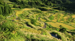 Hoshitoge Rice Fields, Niigata Prefecture, Japan Stock Footage