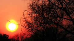 Sunny  red  sunrise through branches of trees  .  PAL Time lapse - stock footage