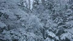 Rimed trees in Hokkaido, Japan Stock Footage