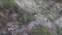 Roe deers in mountain Stock Footage
