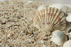Some sea shells on sand - stock photo
