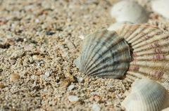 Some sea shells in sand close up - stock photo