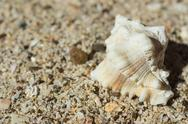 Stock Photo of Beautiful sea shell on sand close up