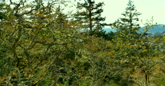 4k Garry Oak Meadow, Pacific North West, Coastal Meadow on Mountains Stock Footage