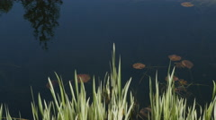 Pond at Van Dusen Garden Vancouver BC Canada Stock Footage