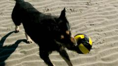Dog retrieving a Toy out of the Water Stock Footage