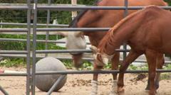 Horse flirt 3 Stock Footage