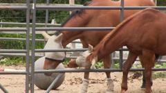 Horse flirt 4 Stock Footage