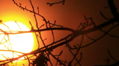 Red  sunrise with big sun through branches of trees  . - stock footage