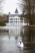 White swan with castle of Renswoude, The Netherlands - stock photo