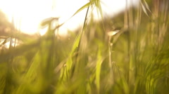 Grass field travel through the eyes of an animal. Stock Footage