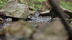 mountain streams - stock footage