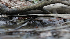 Mountain streams Stock Footage