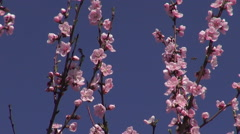 Spring Stock Footage