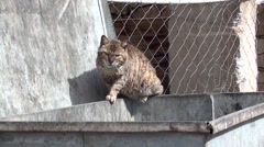 Filthy old cat on waste container 2 Stock Footage