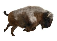American Bison Piirros