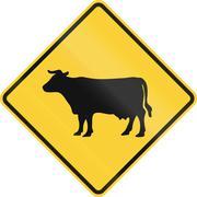 Cattle Crossing - stock illustration
