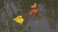 Аlowers at Ancient Siam Park in Samut Prakan Province, Thailand Stock Footage