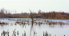 Flooded landscape with dead trees Stock Footage