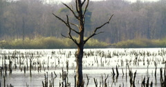 Dead tree in lake Stock Footage