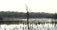 Lake with dead trees Netherlands Stock Footage