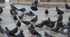 4K scene of Pigeons in Istanbul Stock Footage