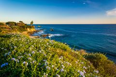 Flowers and view of the Pacific Ocean from cliffs in Corona del Mar, Californ Stock Photos