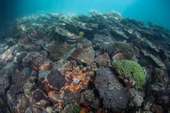 Diversity of Corals - stock photo