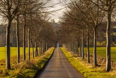 Avenue of young trees line a lane Stock Photos