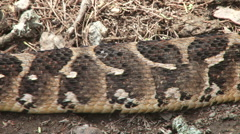 The belly scales of a puff adder snake Stock Footage