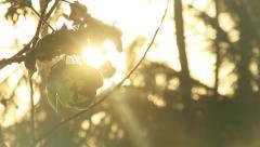 Palm tree leavs in forest sun light leaks Stock Footage