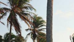 Palm tree from top to botton Stock Footage