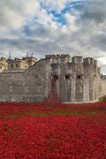 Tower of London Remembrance Day Poppies Art Installation Kuvituskuvat