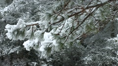 Snow Tree Flicked - stock footage