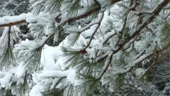 Snow Tree Flicked Close Up - stock footage