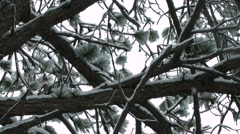 Snow Trees Moving Pan.mp4 Stock Footage