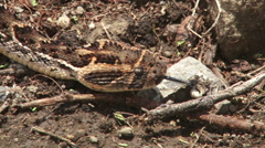 Camouflaged snake moving along the ground Stock Footage