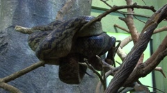 Snake in Tree resting Stock Footage