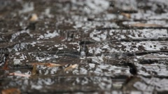 Water dripping on the pavement.Close-up. Autumn. 2013 - stock footage
