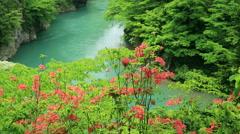Mountain stream, Akita Prefecture, Japan Stock Footage