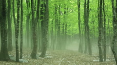 Beech forest in Aomori Prefecture, Japan Stock Footage
